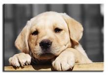 Urocze obrazy przedstawiające bardzo sympatyczne słodki szczeniaki spodobają się nie tylko miłośnikom tych zwierząt. To realistyczne, bardzo efektowne...