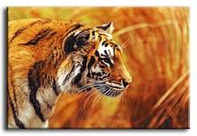 Obraz Tygrys Reprodukcja G92786