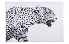 Obraz BRAVE - dziki kot